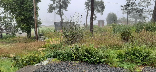 Regn och dimma under torrsättningsdagen, sett från vårt grillhus.